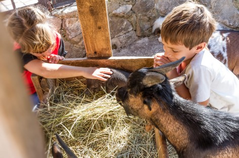 Farm Holidays with kids in Salzburger Land